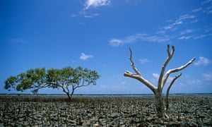 Gulf of Carpentaria's record mangrove dieback is a case study of