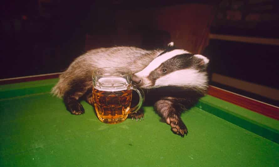Teka supping from a pint in Gloucestershire
