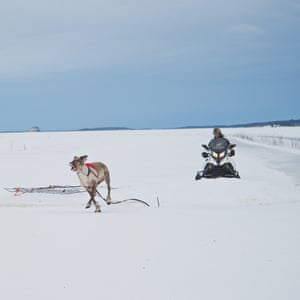 Snowmobiles are used to help bring back a runaway reindeer to the fenced area