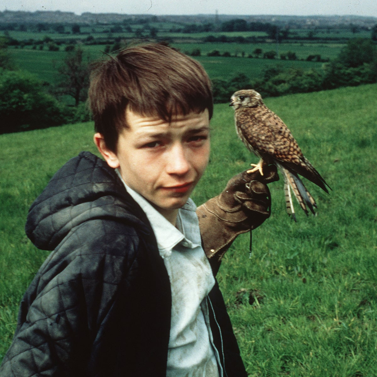 No Way But Gentlenesse By Richard Hines Review Life With Kes The Kestrel Autobiography And Memoir The Guardian