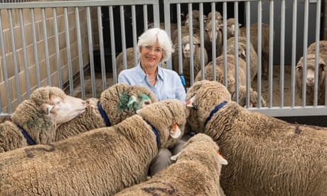 Scientists deploy GM sheep in fight to treat Huntington's disease