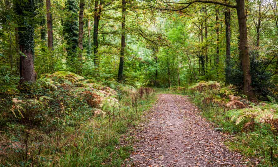 Woodland path through the Forest of Dean, Gloucestershire.