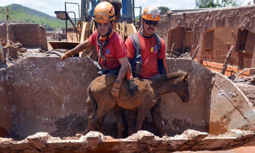 A foal is rescued at the site of the dam rupture in the town of Bento Rodrigues.