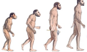 Illustration of human evolution from left to right Australopithecus afarensis, Australopithecus africanus, Homo erectus and Homo sapiens.
