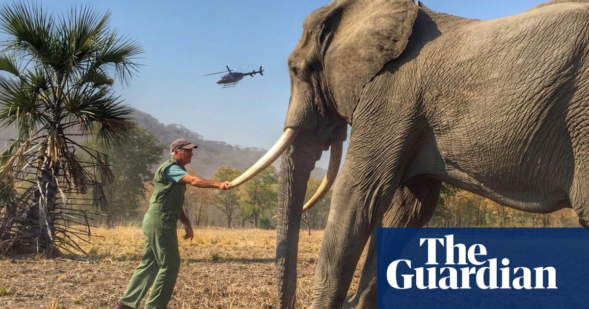 Prince Harry loses Mail on Sunday complaint over sedated wildlife photos