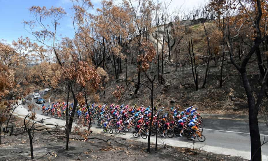 The Tour Down Under peloton in a bushfire-damaged area in the Adelaide Hills