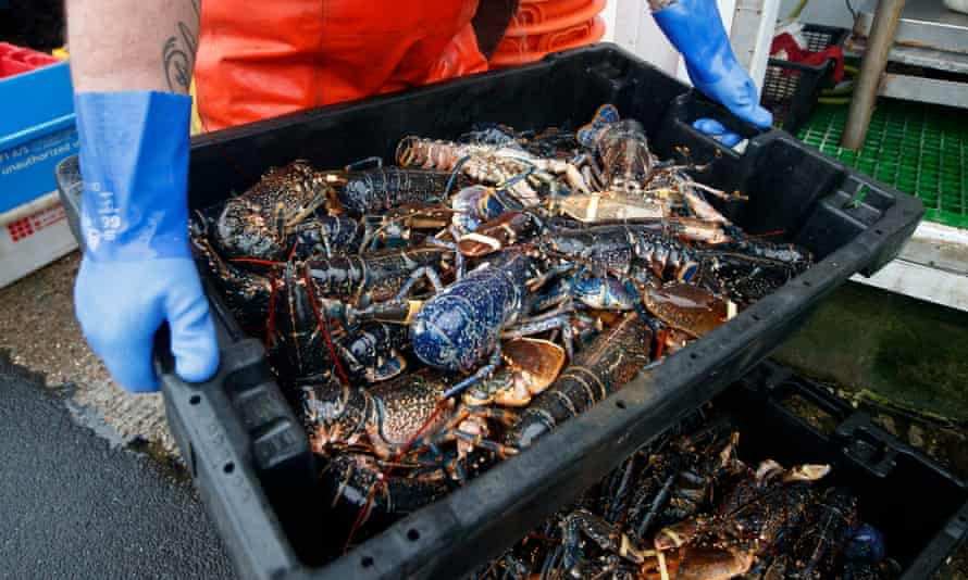 Crate of lobsters