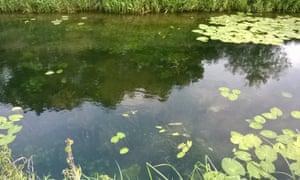 Aquatic plants in Counter Drain, Baston Fen