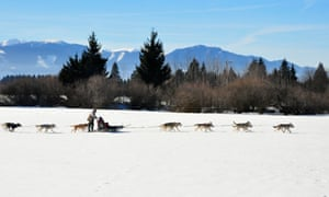 A line of huskies pulling a sled with one person sitting and one standing on it