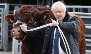 Boris Johnson and bovine friend