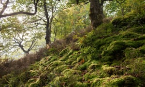 """The Llennyrch """"Celtic rainforest"""" in Snowdonia, Wales: ancient woodland dating back to the last ice age."""