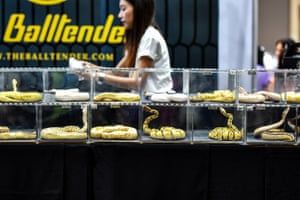 Snakes on display at the Pet in Wonderland show in Bangkok, Thailand
