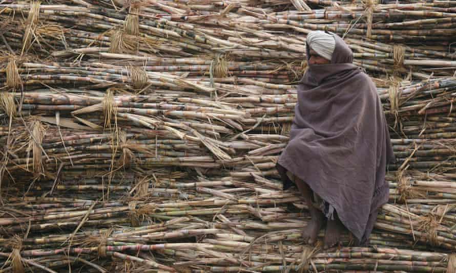 Indian sugar cane farmer