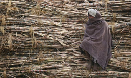 Indian sugar cane farmer