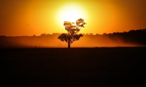 shadow of a tree against a yellow sun