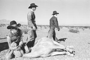 The round-up of the last wild horses in the desert of Arizona, 1980.