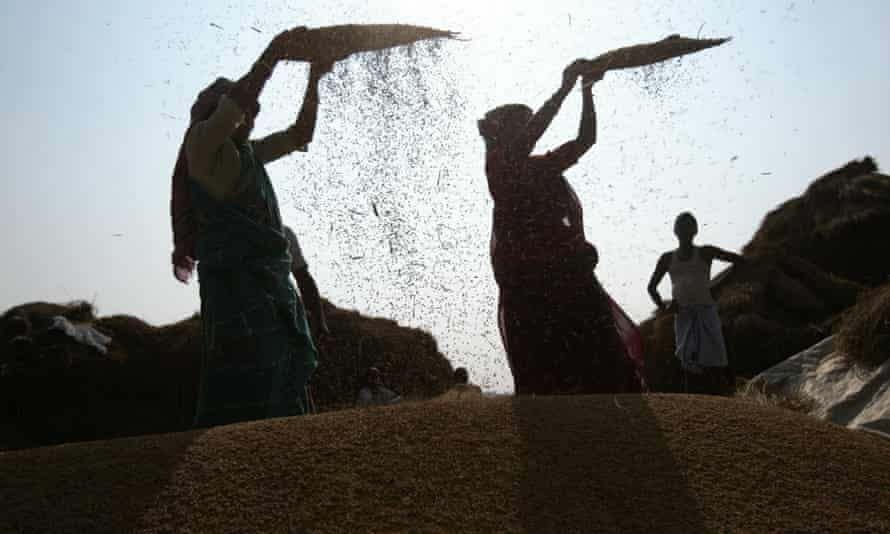 Women sift rice in West Bengal, India.