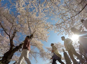 Tourists walk beneath flowering trees at the Tidal basin in Washington, DC