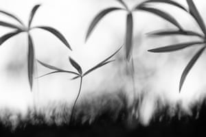 Runner up, plants and fungi: Samuel Pradetto Cignotto (Italy), Compositions of nature