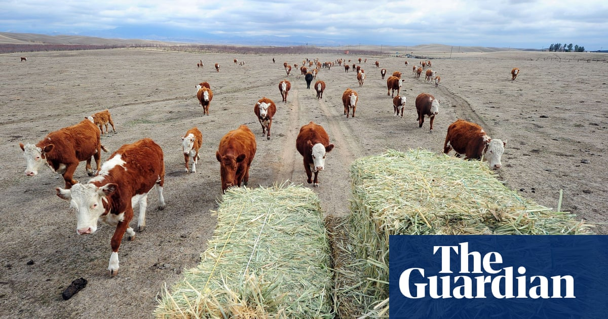 Beef-eating 'must fall drastically' as world population grows