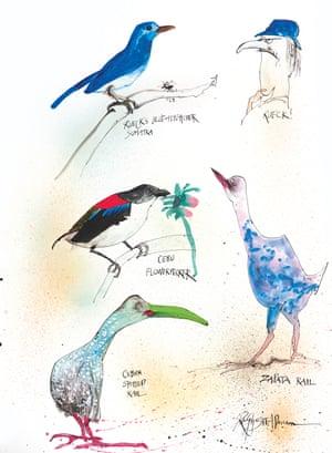 Rueck's Blue Flycatcher Sumatra, Fly, Rueck ... by Ralph Steadman