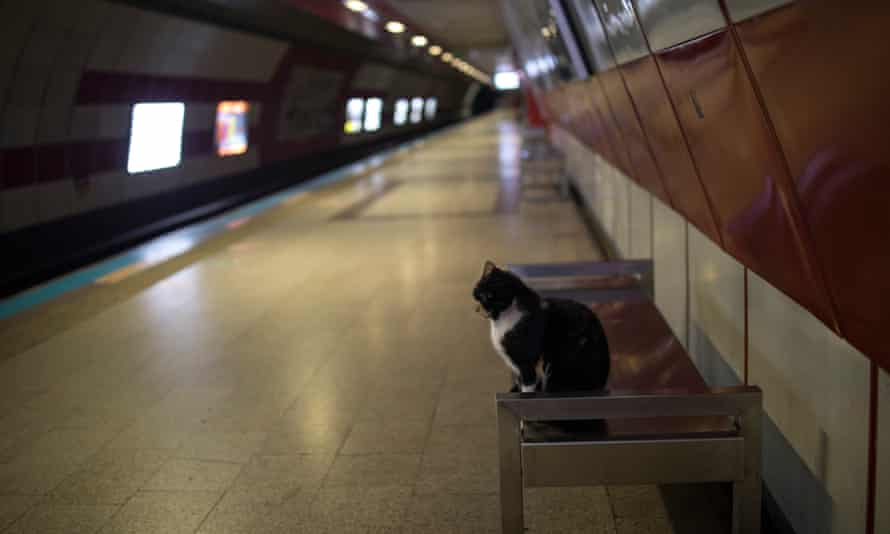 A stray cat has Taksim metro station, Istanbul, to itself.