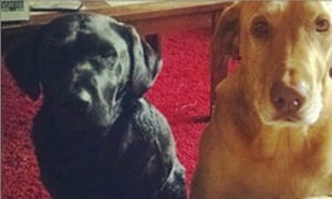 The two dogs, Dexter and Dahlia, who died on 20 August 20 after jumping into a scalding natural hot spring at Panther creek hot springs in Idaho.