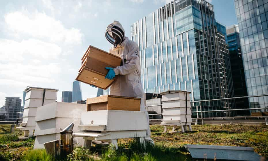 A beekeeper inspects the hives at Bermondsey Street Bees in London