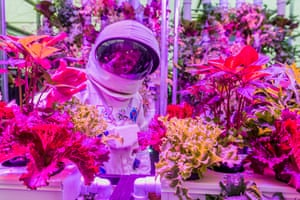 Hydroponics at RHS Chelsea Flower Show, UK, by Guy BellThe future of food? Hydroponic plants on the Rocket Science stand are being developed for use in space and as one of the many ways to feed an ever-expanding population on Earth.