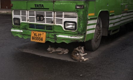 In the southern state of Kerala, Kochi, stray dogs shelter from the rain.