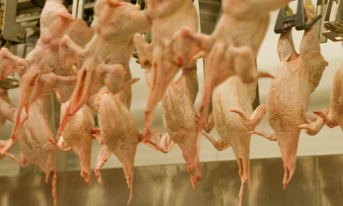 Eu Plan To Reduce Checks On Chickens Will Increase Food Poisoning