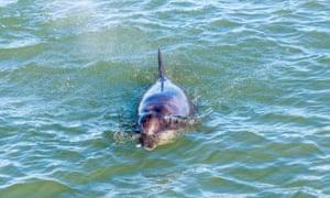 Aberdeen Bay Bottlenose Dolphins