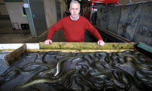 Pat Close at the Lough Neagh fishery co-op.
