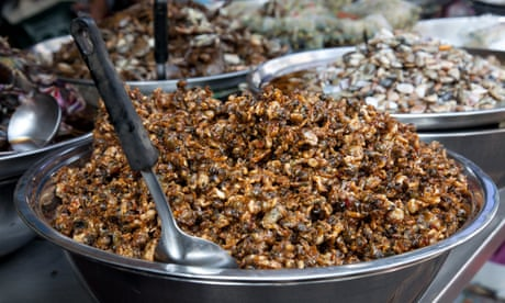 Ants in your pans – can I get the bug for eating insects?