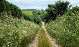 Hedgerows alongside a footpath in Lincolnshire