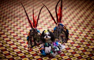 The show features themed catwalk shows with attendees' dogs in costume walking alongside rescue dogs needing homes