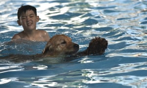 A young boy watches over his pet dogs as they make their way through the water