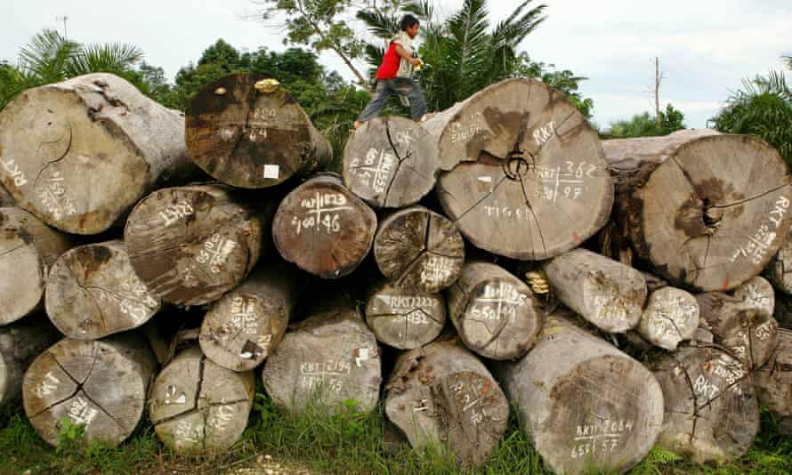 Timber in Indonesia