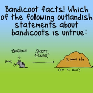 """Bandicoot facts! Which of the following outlandish statements about bandicoots is untrue?"""