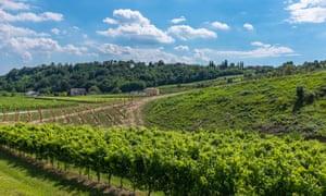 Vineyards near Conegliano in the Veneto, Italy.