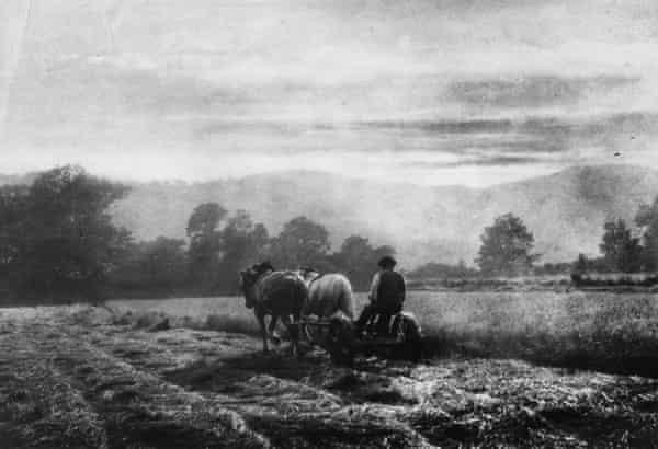 Harvesting in Ambleside in 1905