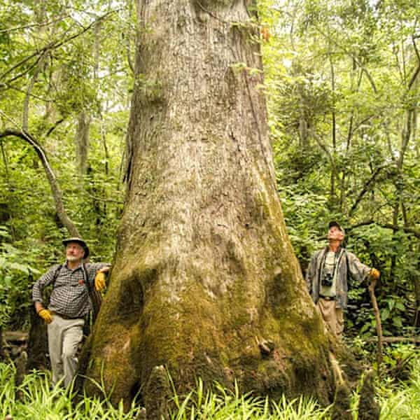 Dendrochronologist Dave Stahle, left, has been able to visit these cypress trees thanks to Charles Robbins, right, who runs a boating service in the area.
