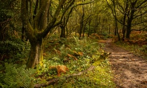The Woods of Leith Hill.