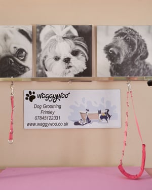 I can do this myself': how one woman made it in the dog-grooming