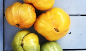 Now's the time to ripen the last tomatoes.