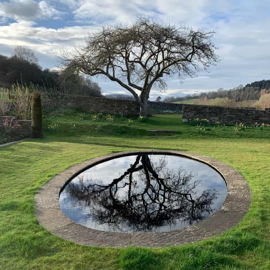 photograph of tree reflected in round pond