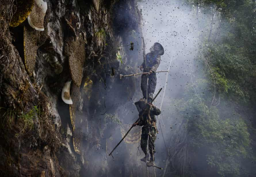 Ethnic Lisu honey hunters stand on a rope ladder gathering wild cliff honey from hives near Mangshi, Yunnan province, China