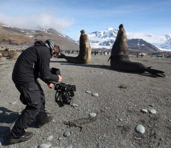 'What risks are we taking?' … filming elephant seals