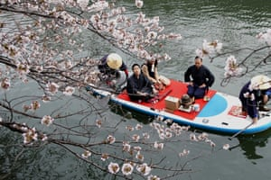 People admire cherry blossoms