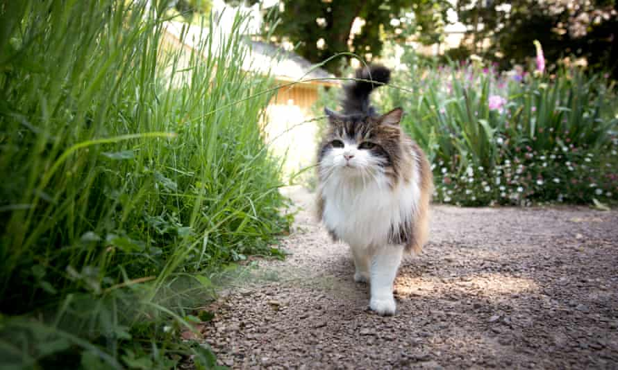 A local cat regularly visits the garden